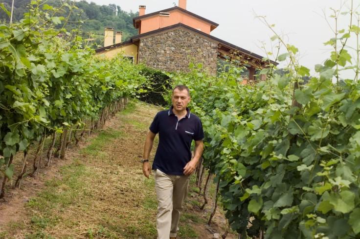 F2951120 antonio in the viney