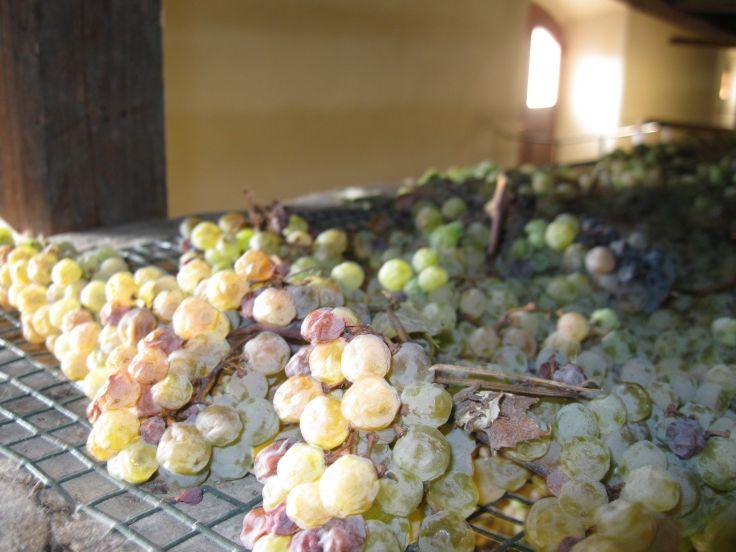 Vin Santaia