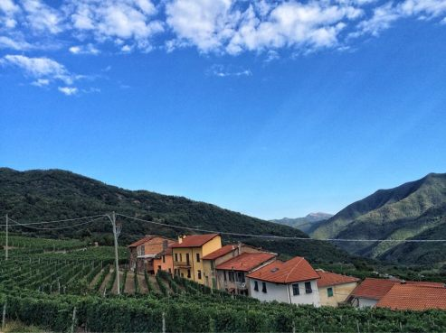 Ormeasco.di.Pornassio-Evening.light on.our.vineyard
