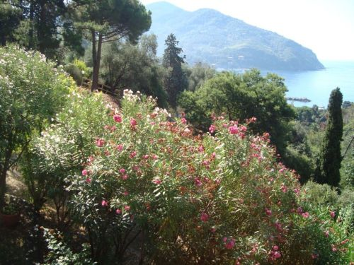 Liguria
