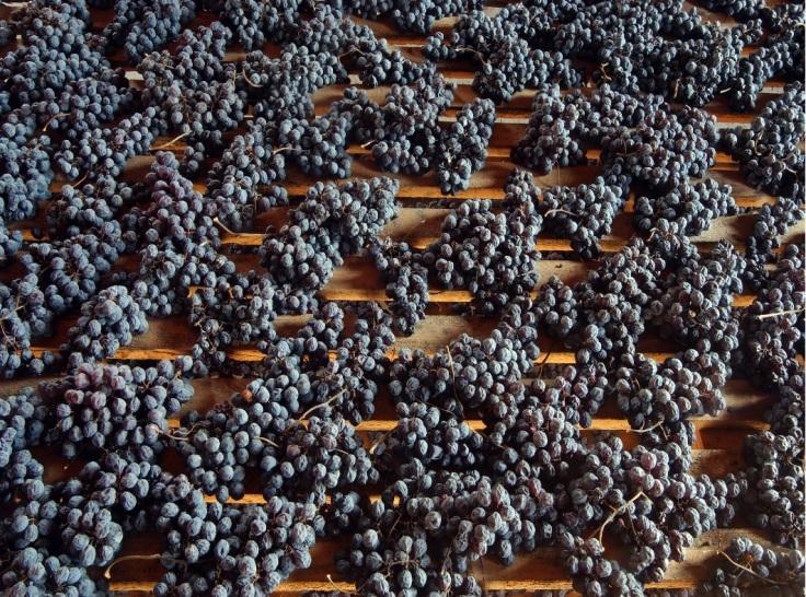 Dried grapes for Sforzato