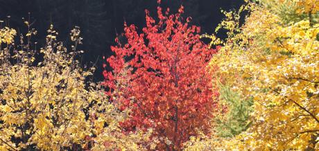 Foliage_460x218